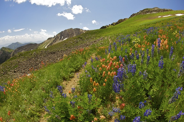 Mother Nature showing off on one of Snowbird's trails.